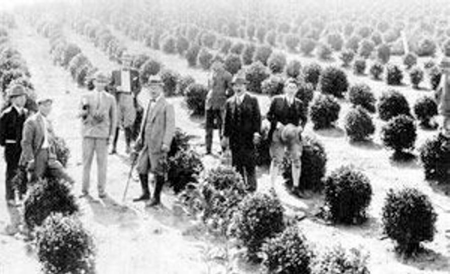 japanese-immigrants-on-a-brazilian-tea-plantation